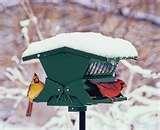 Bird Feeder On Pedestal pictures
