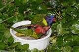pictures of Bird Feeder On Pedestal