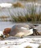 Bird Feeders Southlake photos