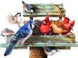 Bird Feeder Smaller Birds images