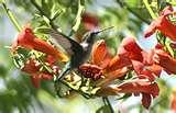When To Put Humming Bird Feeders Out photos