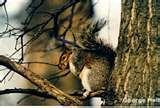 photos of Bird Feeders Illegal