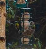 Bird Feeders My Garden pictures