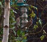 Bird Feeders My Garden photos