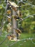Bird Feeders Easy To Clean pictures