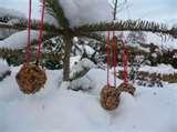 Bird Feeders Out Pine Cones pictures