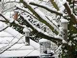 Bird Feeders My Garden images