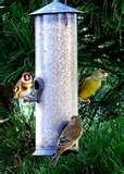 pictures of Bird Feeder Energy