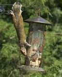 Bird Feeder Squirrel Proof Pole photos