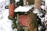 Rhs Bird Feeders photos