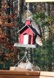 Bird Feeder Virginia pictures