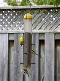 pictures of Bird Feeder Yard