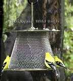 images of Bird Feeders Cameras