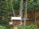 Bird Feeder Saucers photos