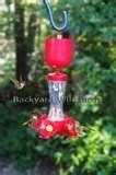 photos of Bird Feeder Hummingbird Nectar