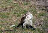Bird Feeders Cincinnati pictures