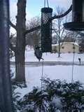 photos of Squirrel Proof Bird Feeders Spinning