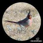 Bird Feeders Juneau Ak