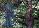 Bird Feeder Articles images