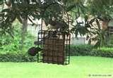 pictures of Bird Feeder Titmice