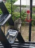 photos of Fire Escape Bird Feeder