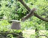 Squirrel Proof Bird Feeders Spinning pictures