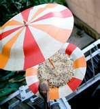 Bird Feeder Films photos