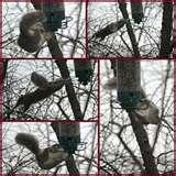 pictures of Squirrel Proof Bird Feeders Spinning