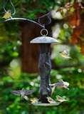 images of Bird Feeder City
