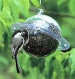 Bird Feeder Titmice