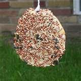 images of Bird Feeder Bagel