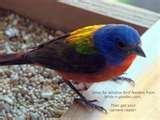 photos of Bird Feeders Nuts