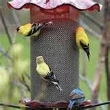 photos of Bird Feeder Do Birds Like Best