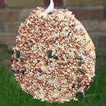 pictures of Bird Feeder Bagel