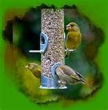 Bird Feeders Advice