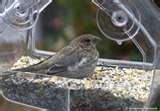 Plastic Bird Feeder Cups