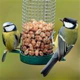 Bird Feeders Advice pictures