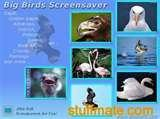 photos of Bird Feeder Screensaver