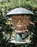 Bird Feeders In Ct images