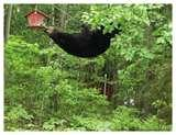 images of Bird Feeders Info
