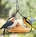 Bird Feeders Info images