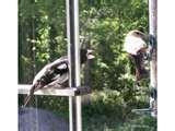 images of Bird Feeder Rv