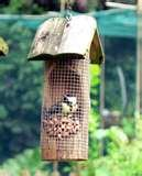 images of Bird Feeder By Birds