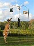 photos of Bird Feeder Catalog