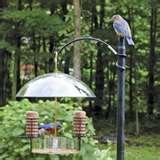 Bird Feeder Rv photos