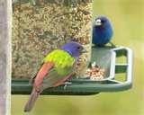 Bird Feeder Rv pictures