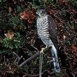 Bird Feeders Spread Disease images