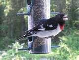Bird Feeder Rv images