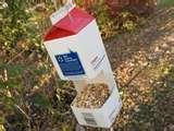 Bird Feeder Egg Carton pictures