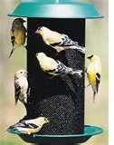 Bird Feeders Spread Disease photos